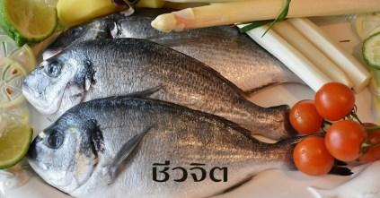 กินปลา, ปลา, เมนูลดน้ำหนัก, ลดน้ำหนัก, ลดความอ้วน