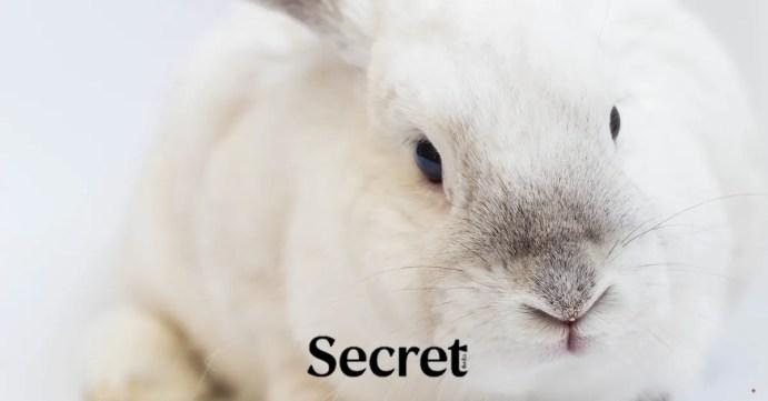 กระต่ายผู้ทรงศีล