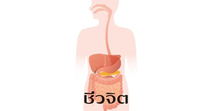 ดูแลระบบย่อยอาหาร, ระบบย่อยอาหาร, อาหารสุขภาพ, การดูแลสุขภาพ
