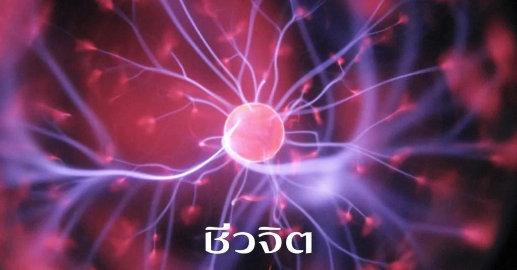 สเต็มเซลล์, เม็ดเลือดขาว, เม็ดเลือดแดง, stem cell, ชีวจิต ,สเต็มเซลล์รักษามะเร็ง