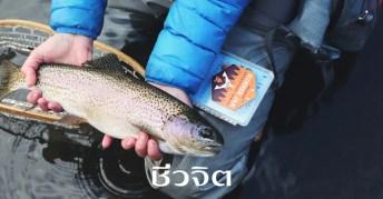 ปลาโมเมก้า3, โอเมก้า3, ปลาไทย
