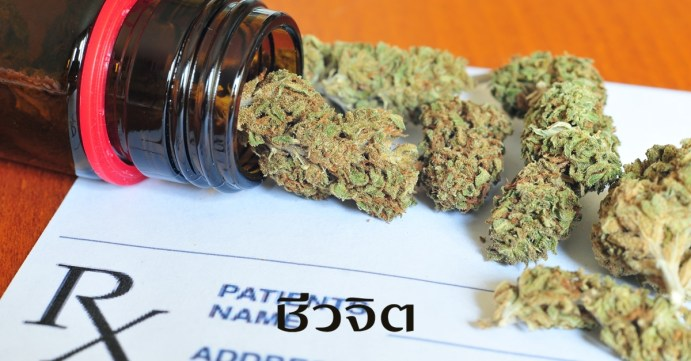 กัญชา, สมุนไพร, ยาไทยผสมกัญชา, ตำหรับยาไทย, ยาไทย กัญชา รักษาโรคผิวหนัง