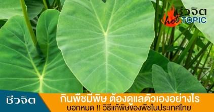 พืชพิษ, บอน, โหราบอน