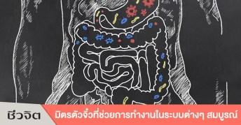 จุลินทรีย์, โพรไบโติก, ระบบย่อย, ลำไส้