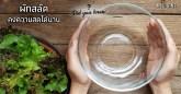 เคล็ดลับ วิธีเก็บผักสลัด ให้คงความสดได้นาน ประโยชน์ของผักสลัด เคล็ดลับก้นครัว เคล็ดลับการทำอาหาร