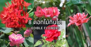 ดอกไม้กินได้ Edible flowers