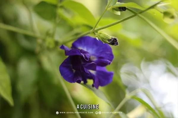 ดอกไม้กินได้ หรือ Edible Flower