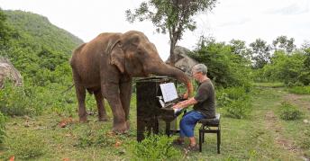 ดนตรีบำบัดช้าง