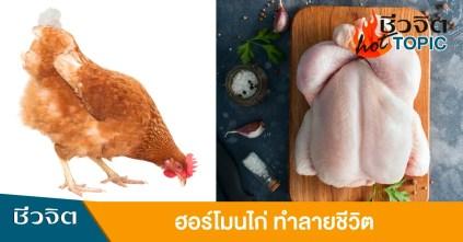 ฮอร์โมนเร่งโต กินไก่ ฮอร์โมนจากไก่ โตเกินวัย