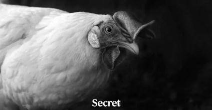 แม่ไก่ฟังธรรม