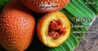 ฟักข้าว Gac fruit