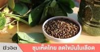 ชุมเห็ดไทย