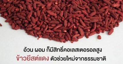 red yeast rice ข้าวยีสต์แดง