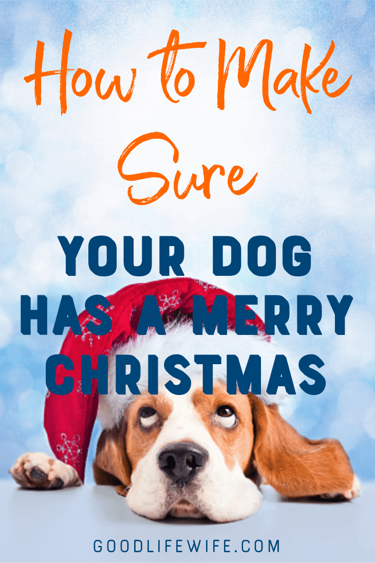How to make sure your dog has a Merry Christmas! Tips on safety, gifts and guests.