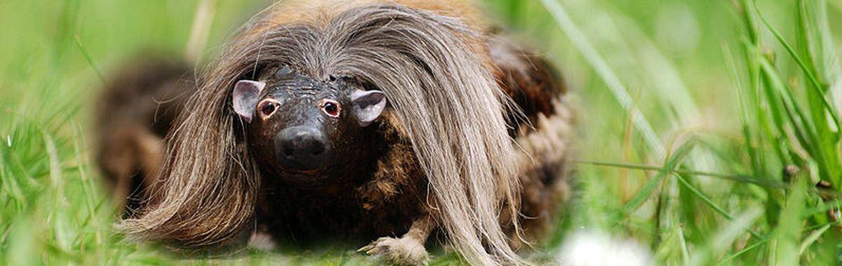 Image result for wild haggis