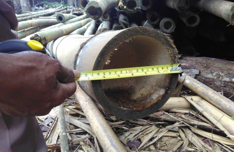 bambu untuk kandang lebah madu