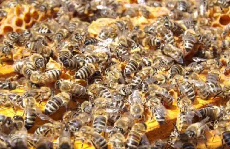 kumpulan lebah pekerja membangun sarang
