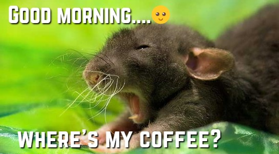 Funny Good Morning Memes, Good Morning Nice Meme Images For Her Or Him