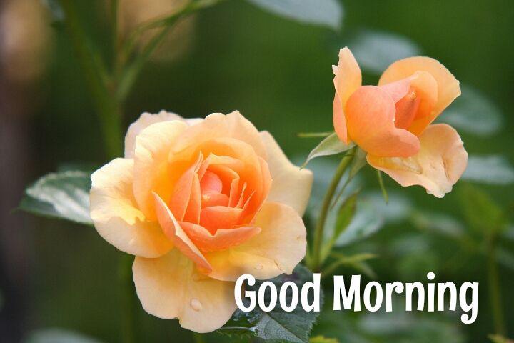 20 flowers good morning