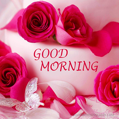 good morning red roses