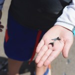 How-To Find Shark Teeth on St Simons Island
