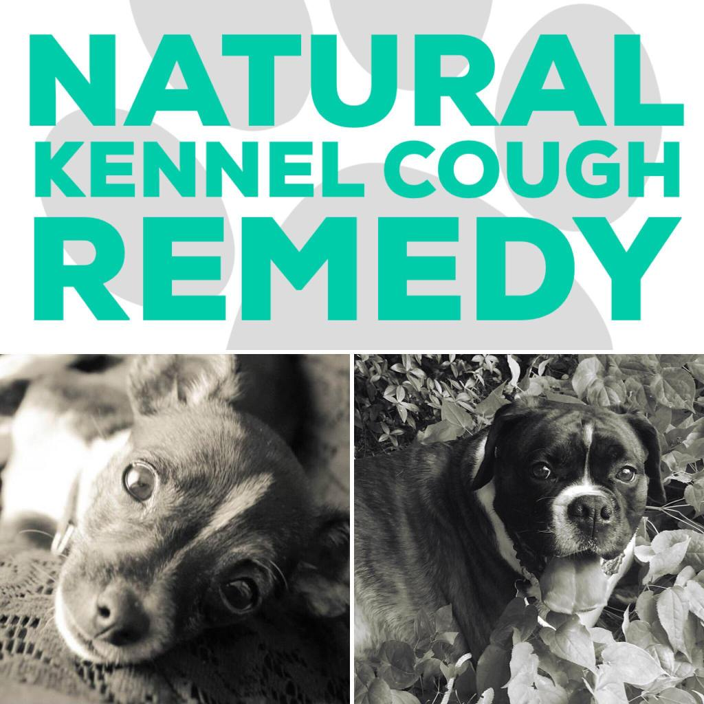 Natural Kennel Cough Remedy