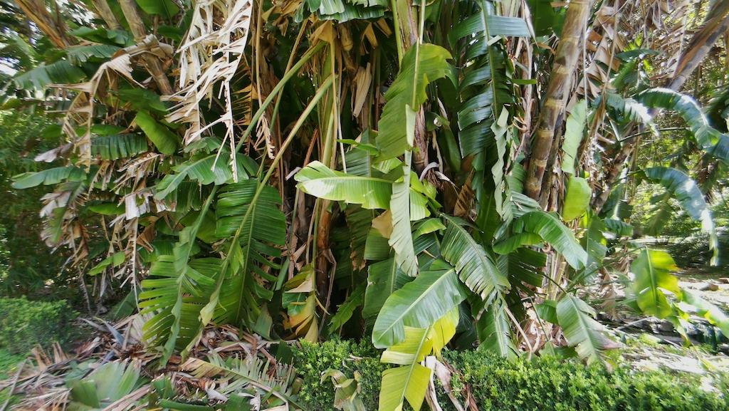 jardin tropical visiter Lisbonne en 8 jours