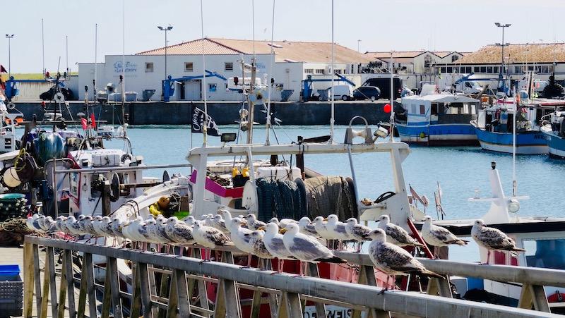 cotiniere ile oleron voyage blog