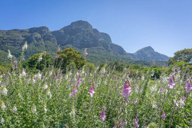 Kaapstad vakantie Zuid-Afrika Kirstenbosch botanische tuin