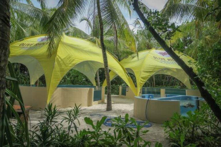 Maldiven reis Coco Palm Dhuni Olive Ridley Project