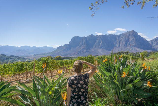 Kaapstad vakantie Stellenbosch