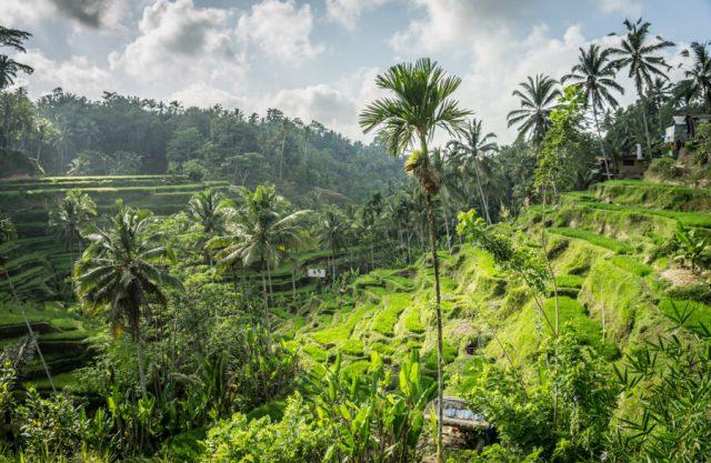Bali Attracties Ubud Tegallalang rijstterrassen