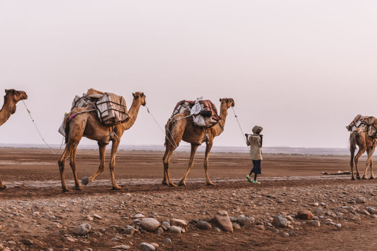 Camel caravan Afar driehoek zout Mekele