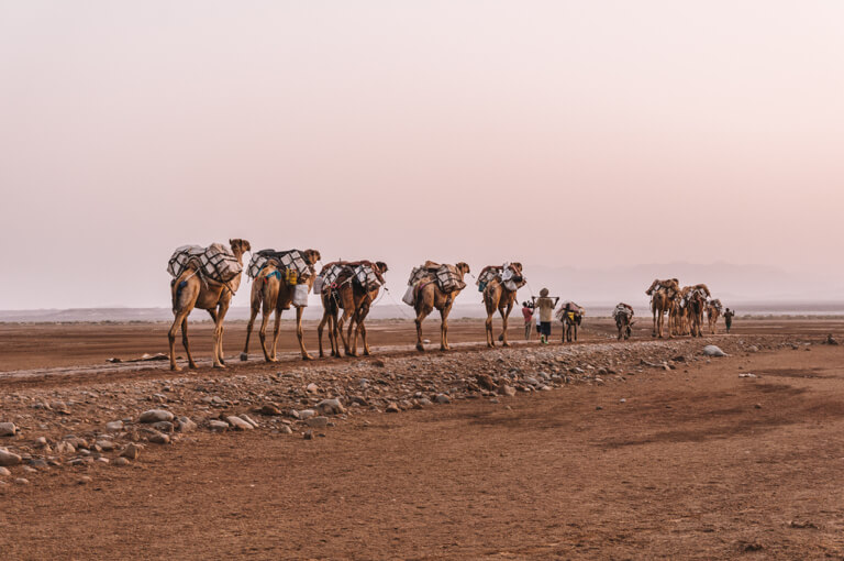 Camel caravan Afar driehoek zout