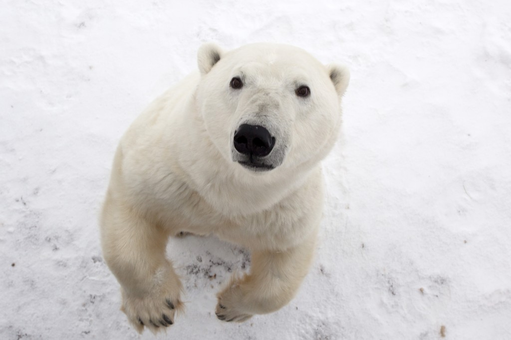 Late Fall Photos For Wallpaper The Polar Bears Of Instagram