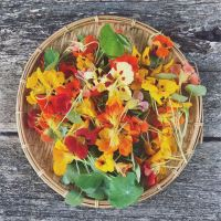 nasturtiums - a tea, a pesto and a cure
