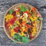 nasturtiums - a tea, a pesto and a cure