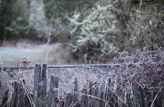 frost on fence
