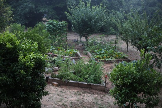 sintra-vegetable garden - 1