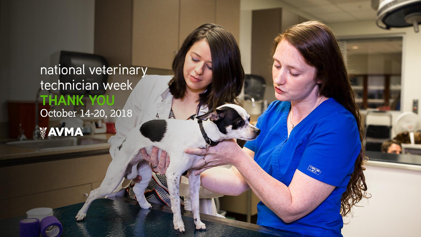National Veterinary Technician Week Is October 14 20