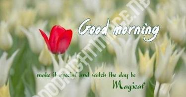 Good Morning Images Wallpaper Pics Photo 12500 +{ Updates Download } - Good Morning Images | Good Morning Photo HD Downlaod