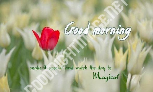 Good Morning Images Wallpaper Pics Photo 12500 +{ Updates Download } - Good Morning Images | Good Morning Photo HD Downlaod