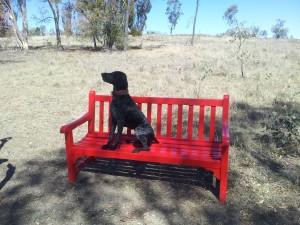 shellbe on bench
