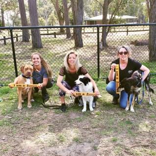 Puppy Preschool & Dog training class dates northern beaches