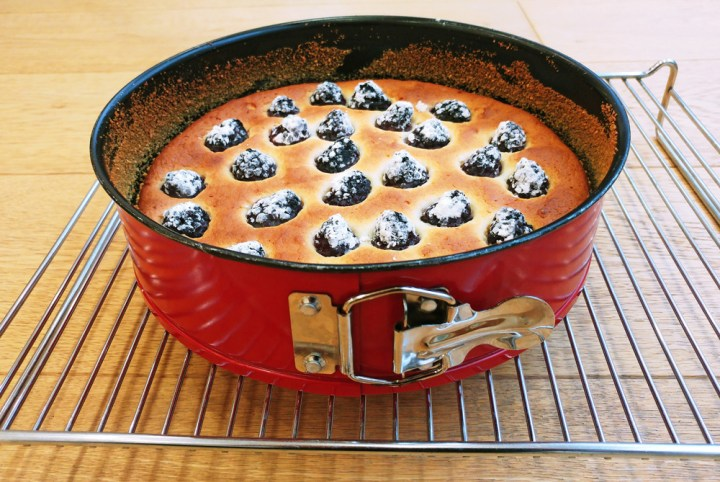 Blackberry and quark sponge cake in a red cake tin standing on a metal grid.