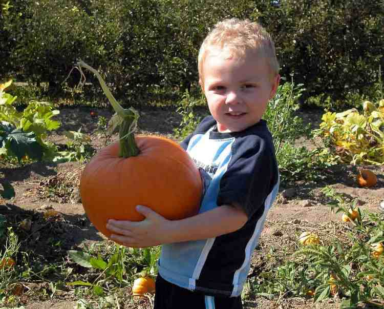 pumpkin carving how to, boy holding pumpkin in pumpkin patch