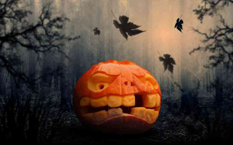 Great Halloween books, pumpkin in the forest