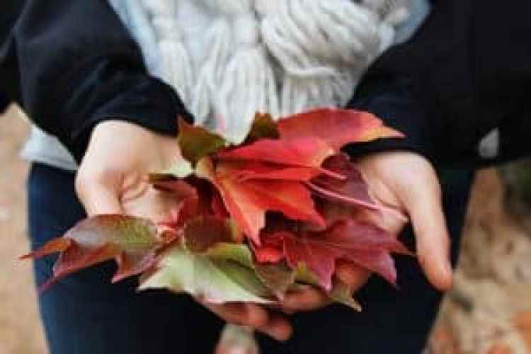 Thanksgiving Gratitude, child holding fall leaves