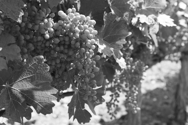 Wine Blending Seminar at Conn Creek