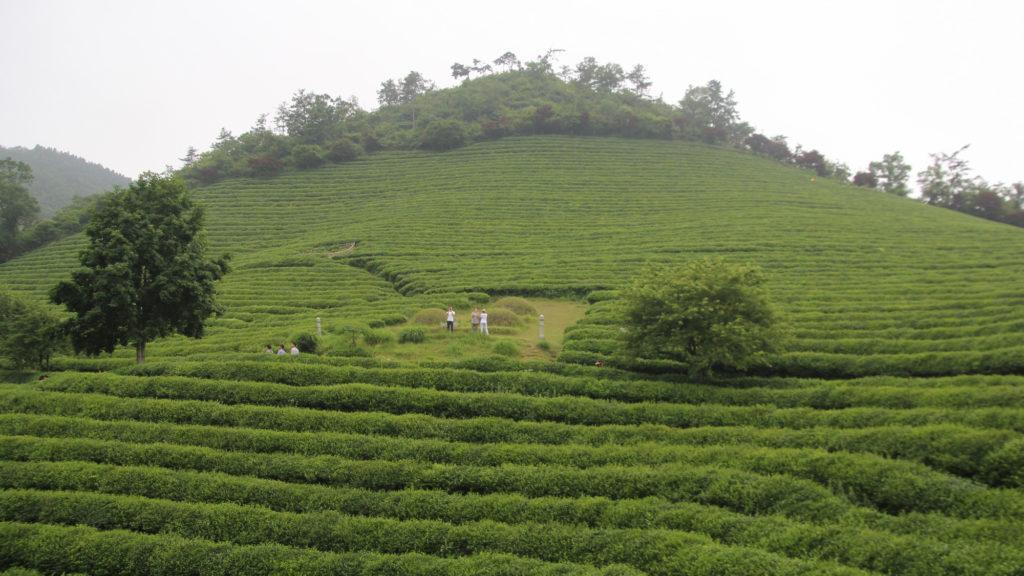 Чай и чаепития в ресторанах. Мировое производство чая.